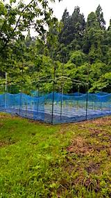 20160609野菜畑の様子3