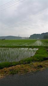 20160609山からの帰り道の様子田んぼ