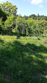20160610草刈り前2