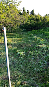20160610草刈り後6