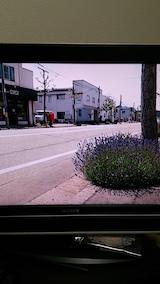20160610ラベンダーの開花を伝えるNHKテレビ1