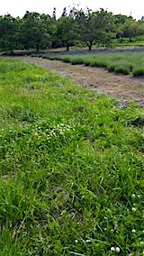20160612草刈り前2