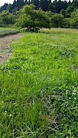 20160612草刈り前3