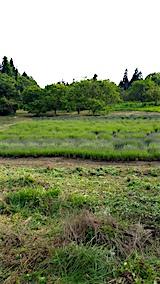 20160612草刈り後4