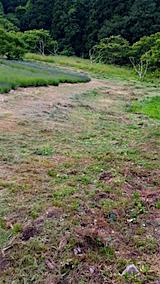 20160612草刈り後1
