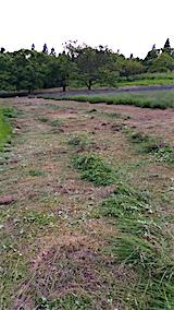 20160612草刈り後2