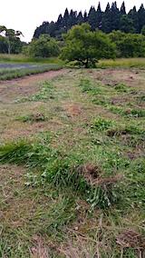 20160612草刈り後3