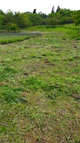 20160612草刈り後5