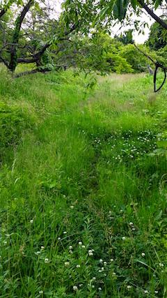 20160614草刈り前1
