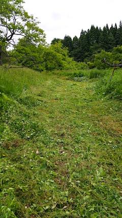 20160614草刈り後3