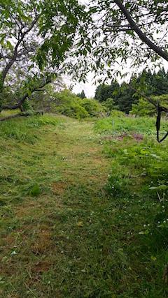 20160614草刈り後1