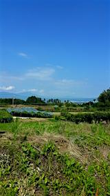 20160711新鶴地区ぶどう畑1