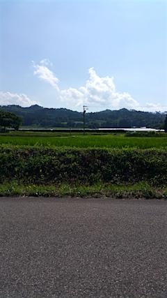 20160711新鶴地区のぶどう畑