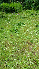 20160716草刈り後1