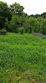 20160716草刈り前の様子1