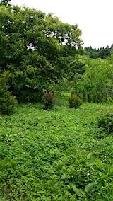 20160716草刈り前の様子2