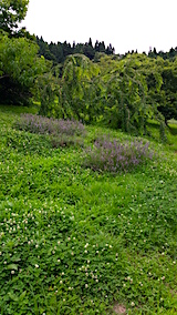 20160716草刈り前の様子3