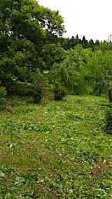 20160716草刈り後の様子2