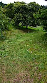 20160716草刈り後4