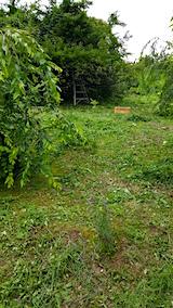 20160716草刈り後5