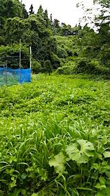 20160716草刈り前の様子8