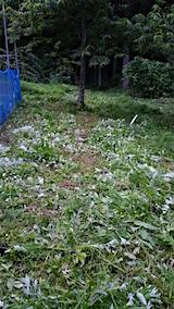 20160716草刈り後の様子5