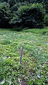 20160716草刈り後の様子9