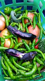 20160909今日収穫した野菜