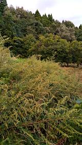 20160909草刈り前の様子3