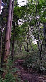 20160911白神の森留山散策杉とブナの境界