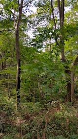 20160911白神の森留山散策樹幹流