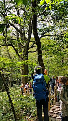 201609011白神の森留山散策樹齢300年のブナの木2