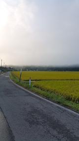 20160915山へ向かう途中の様子田んぼ