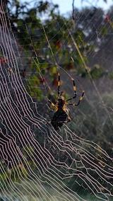 20160915クモの巣2