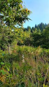 20160915栗の木と草刈り前の様子2