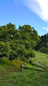 20161001山の様子栗の木とカボチャの畑
