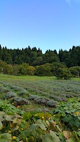 20161001ラベンダーの畑