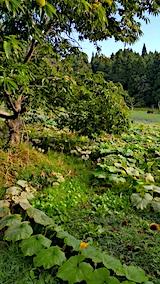 20161001草刈り前の様子1