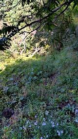 20161001草刈り前の様子2