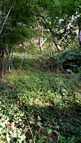 20161001草刈り前の様子3