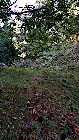 20161001草刈り前の様子午後1