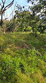 20161004草刈り前の様子3