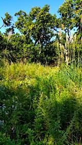 20161004草刈り前の様子4