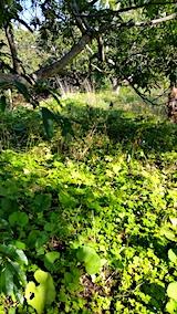 20161004草刈り前の様子5