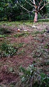 20161004草刈り後の様子1