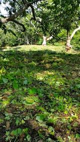 20161004草刈り後の様子5