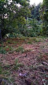 20161004草刈り後の様子午後1