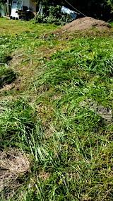 20161007草刈り後の様子2