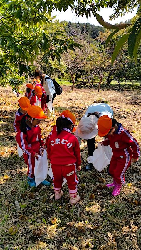20161007幼稚園の栗拾い3