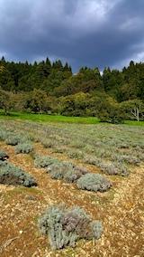 20161027ラベンダーの畑